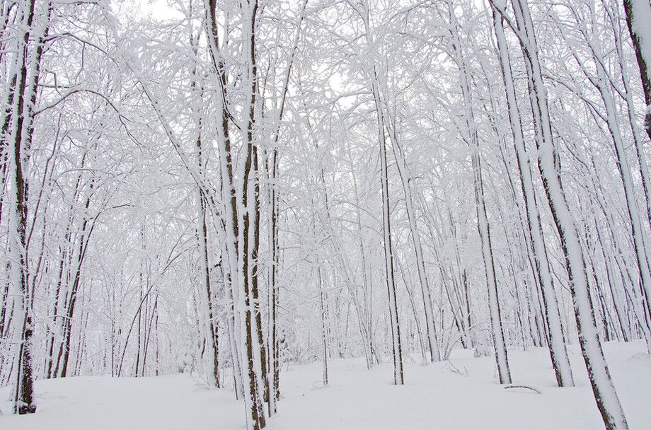 hiver08.jpg