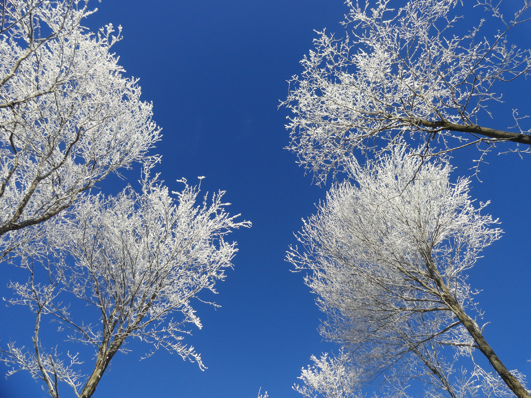 hiver2015-05