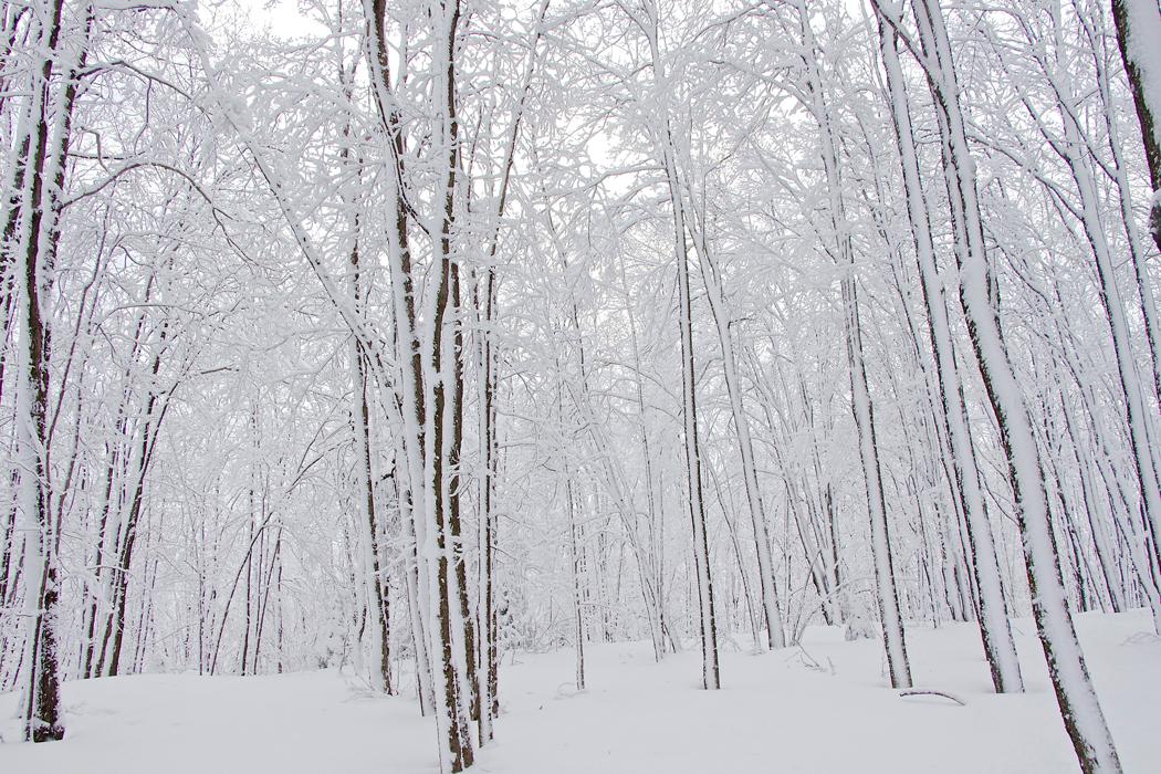 hiver08