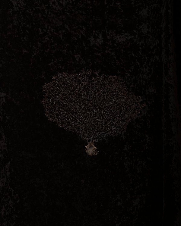 7 Black Memorabilia - Lee Sunjoo