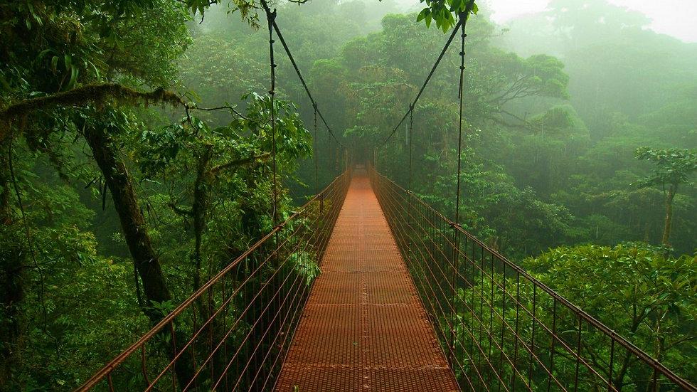 Bridge Costa Rica.jpg