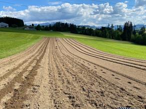 Kräuteranbau auf Grasland