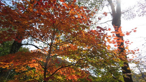 榛名山 紅葉を楽しむゆったりトレッキング(10/30)開催