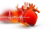 Eletrocardiograma.jpeg