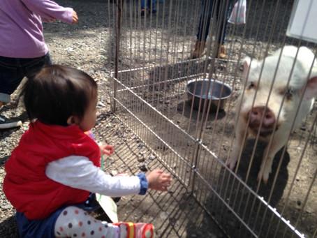 動物と触れ合い★ 中野