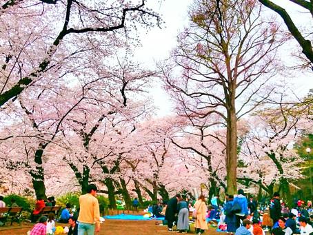 井の頭公園  本田