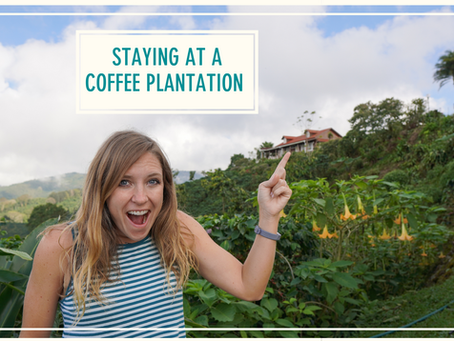 Staying at a Coffee Farm: The Chiapas Diaries Part 3