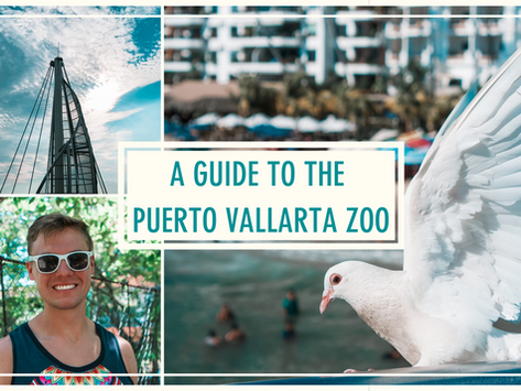 A Complete Guide to the Puerto Vallarta Zoo