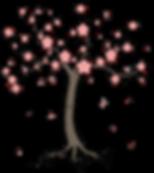 Kirschbaum mit rosa Blüten japanisch Sakura englisch Cherry Blossom Tree