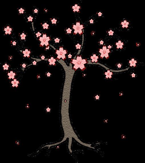Kirschbaum Kirschblüten Sakura Cherry Blossom Tree