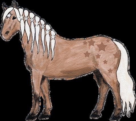 Estrella Haflinger Stute Hengst Sterne alles über Pferde