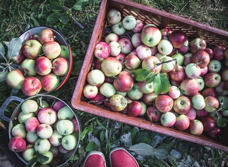 Omenoiden aikaan