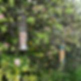 DSC_1621_edited.jpg