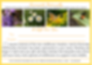 Gift Voucher Yellow A4.png