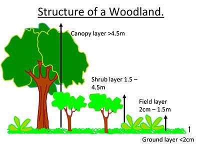 Structure of a woodland.jpg