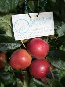 Orchard (6).jpg