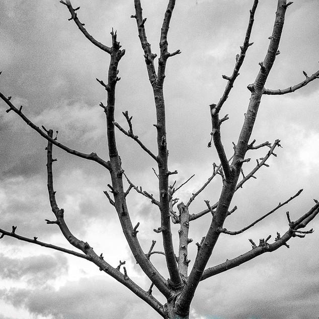 orchard..jpg