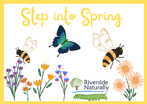 Step In Spring (2).png
