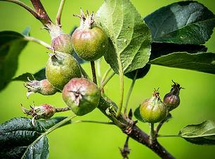 Orchard (11).jpg