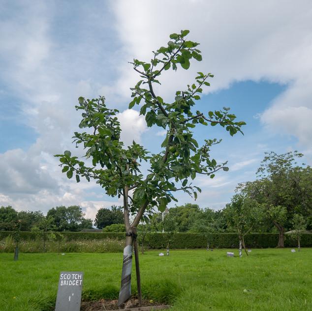 Orchard (7).jpg