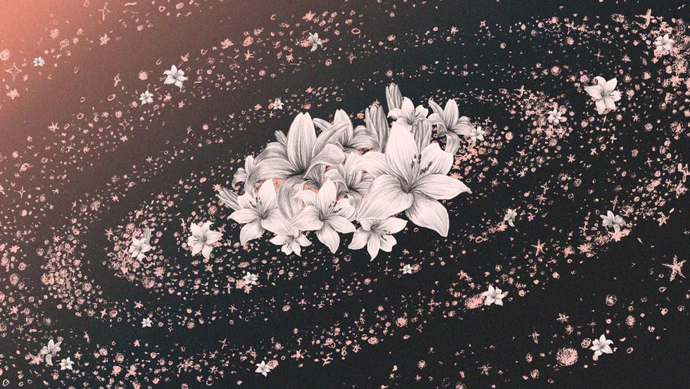 RAKDOK_Milky-way-Lilly-flower.jpg