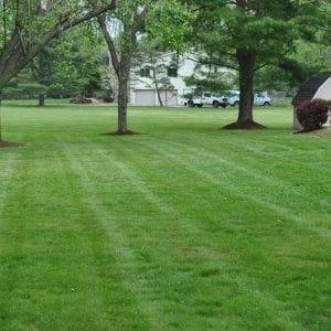 Full Lawn Service