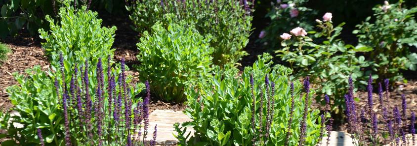 Plants Materials