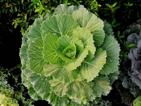 Vitamin K: A Little-Known but Noteworthy Nutrient