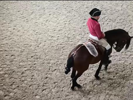 Les effets du shiatsu sur les chevaux de dressage