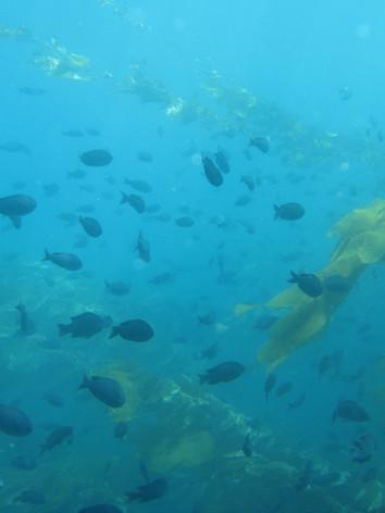 Ship Rock 3-8-08 047.jpg