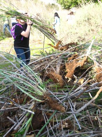 Dec 2010--March 2011 242.jpg