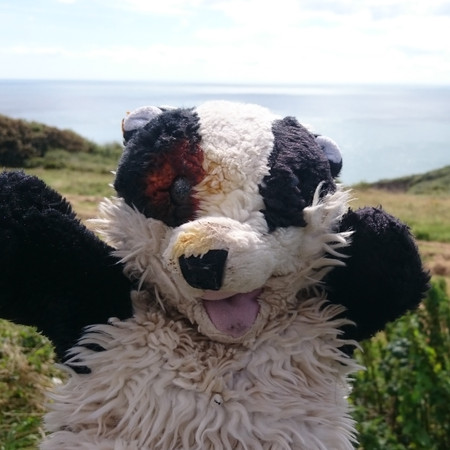 Badger on holiday