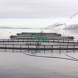 Fish_cages_edited.jpg