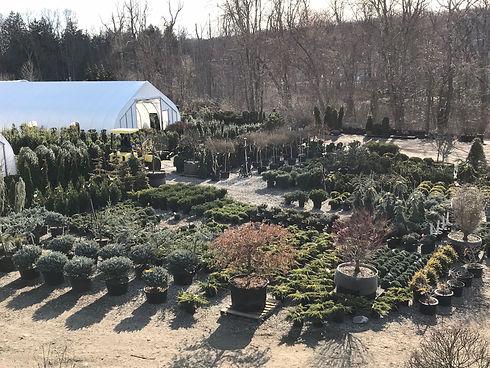 Dwarf conifers + More .JPG