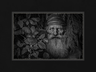 Watcher of the Woods