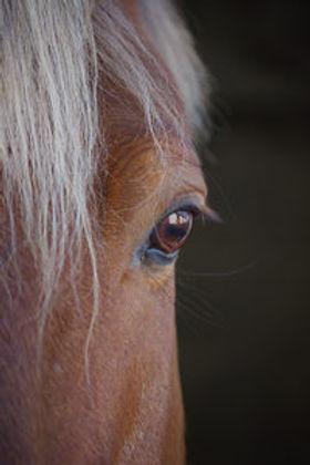 Cavallo-200x300.jpg