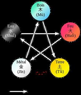 les 5 mouvements servent de base pour une présentation organisée des phénomènes du vivant