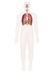 maladies du système respiratoire