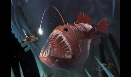 Please can you tell me about the anglerfish?