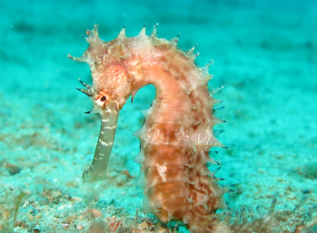 I would love to know more about seahorses?