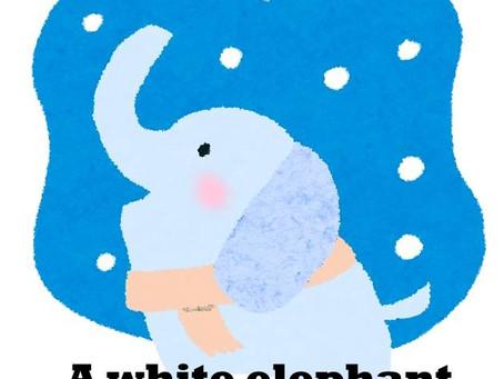 A white elephant!