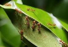 ants 2.jpeg