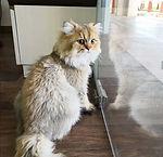 catty.jpg