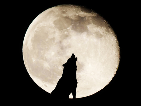 Structure and pace in 'Cycle of the Werewolf'