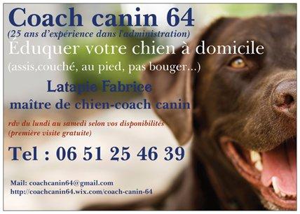 dressage chien 64