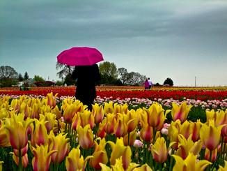 Wooden Shoe Tulip Festival, Woodburn, Oregon