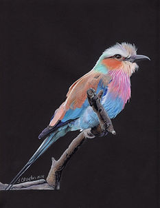 Lilac Breasted Roller002.jpg