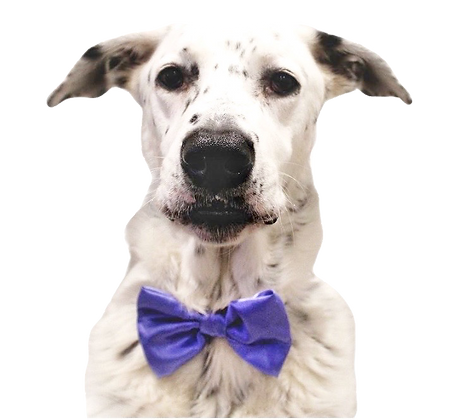 Bluebell satin bow tie