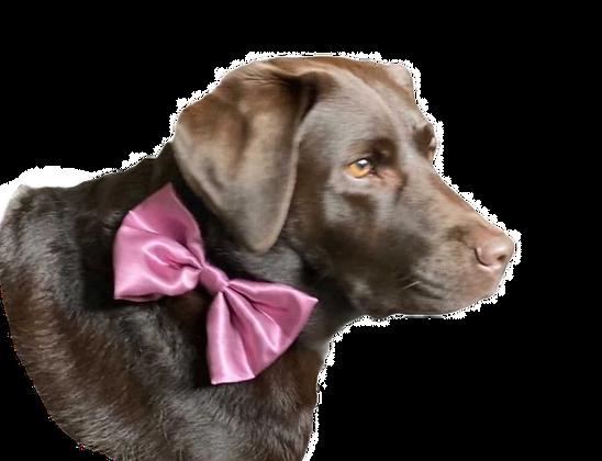 Aubergine satin bow tie