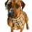 Thumbnail: Furberry plaid Bandana